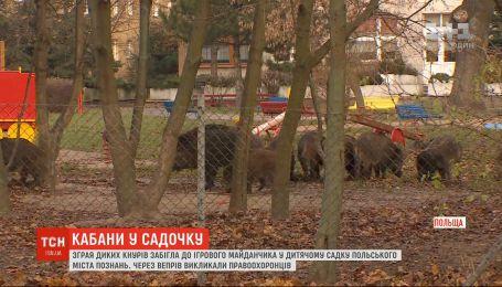 Стая диких кабанов забежала в детский сад в Познани