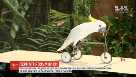 Шоу екзотичних птахів у Болгарії: папуги продемонстрували вміння кататися на велосипеді