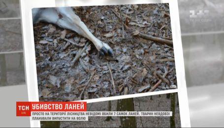 Неизвестные расстреляли семерых самок ланей на Волыни
