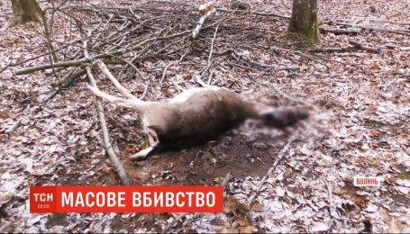 У лісництві на Волині невідомі вночі розстріляли ланей