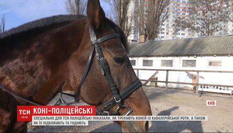 Специально для ТСН полицейские показали, как тренируют лошадей с кавалерийской роты