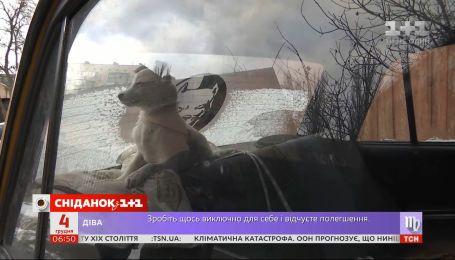 Спецоперація з порятунку цуценяти: у Києві шукають господаря для симпатичного знайди