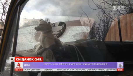 Спецоперация по спасению щенка: в Киеве ищут хозяина для симпатичного найденыша
