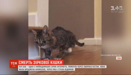 Одна из самых известных кошек в мире Лил Баб умерла из-за болезни костей