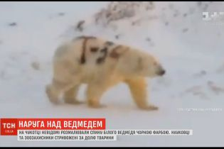 """Неизвестные на Чукотке написали на белом медведе название советского танка """"Т-34"""""""