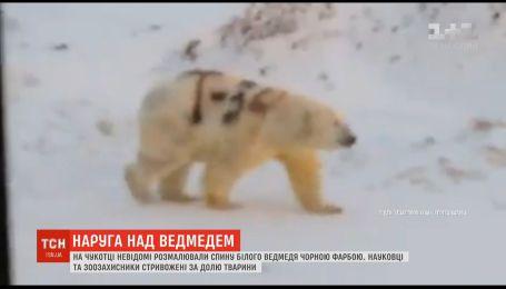 """Невідомі на Чукотці написали на білому ведмеді назву радянського танка """"Т-34"""""""
