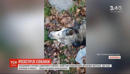 На Львівщині невідомий стріляв у дворового собаку, який був улюбленцем місцевих жителів