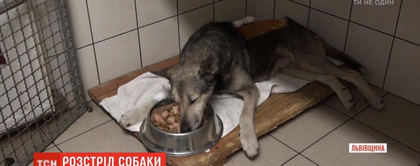 На Львощине неизвестный посреди дня расстрелял дворового пса: с позвоночника изъяли две пули