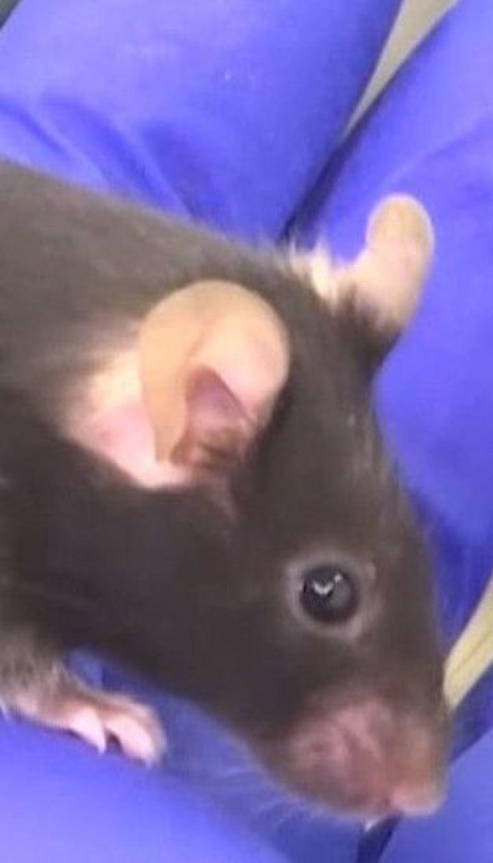 Три групи мишей відправили у космос для участі в експерименті на МКС