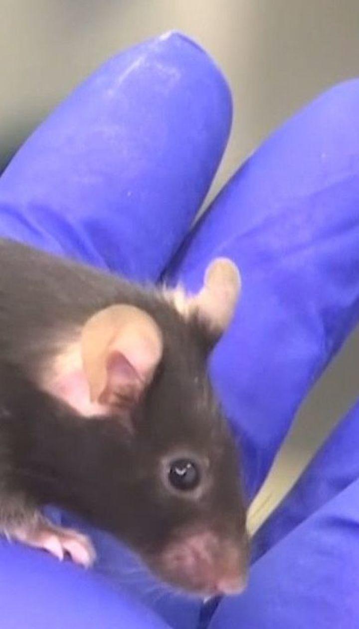 Три группы мышей отправили в космос для участия в эксперименте на МКС