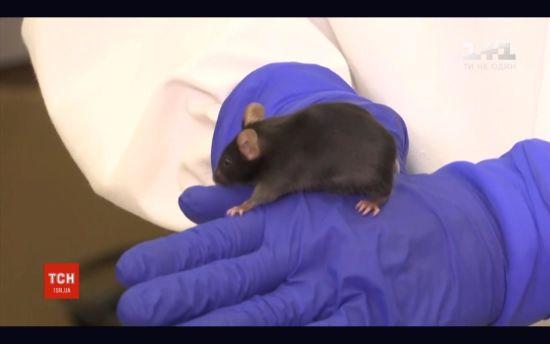 """SpaceX відправить у космос генетично модифіковану """"могутню мишу"""""""