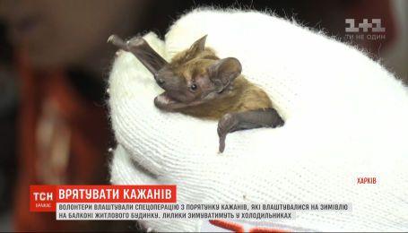 Спецоперацию по спасению 500 летучих мышей развернули в Запорожье