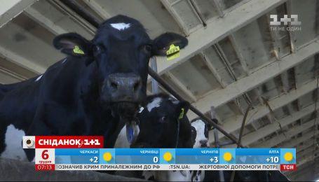 Украина оказалась на 25 месте в мировом рейтинге производителей молока – экономические новости