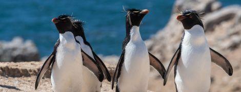 """Інцест, ревнощі та """"подружні"""" зради. Чому світ вже два роки спостерігає за стосунками групи японських пінгвінів"""