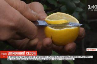 Звідки в Україну привозять лимони і як вибрати найкращий