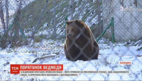 Медвежий приют на Львовщине пополнился новым жителем