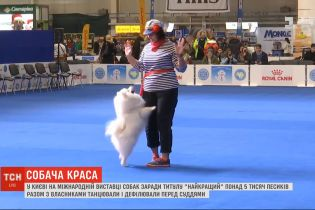 Понад 5 тисяч песиків разом власниками танцювали та дефілювали перед суддями на виставці собак