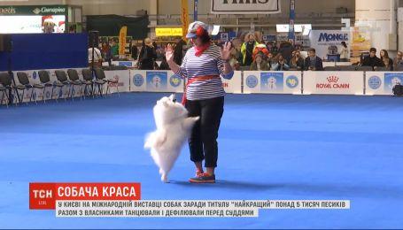 Более 5 тысяч собак вместе владельцами танцевали и дефилировали перед судьями на выставке собак