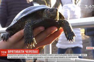 У Вінниці волонтери взялись витягувати черепах із замерзлого озера, аби ті не загинули взимку