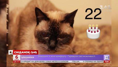 """Старше королевы Великобритании: в гостях """"Сніданка"""" 22-летняя кошка Алиса"""