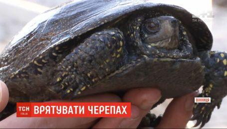 Винницкие волонтеры спасли черепах из замерзшего искусственного озера