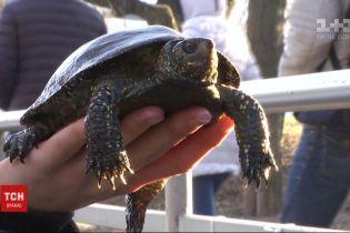 Врятувати черепах: у Вінниці волонтери взялись витягувати рептилій із замерзлого озера