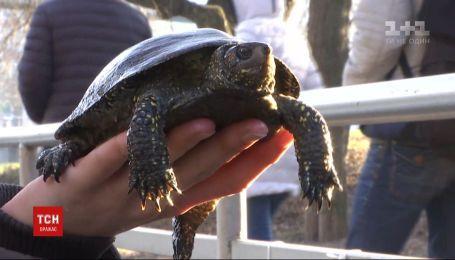 Спасти черепах: в Виннице волонтеры взялись вытаскивать рептилий из замерзшего озера