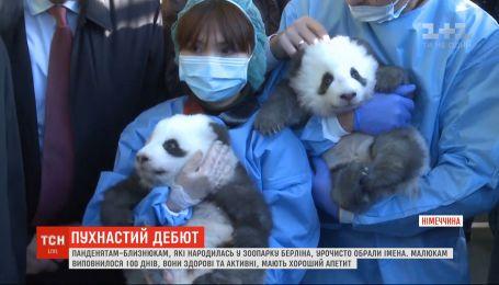 Новорожденных панд-близнецов показали зрителям берлинского зоопарка