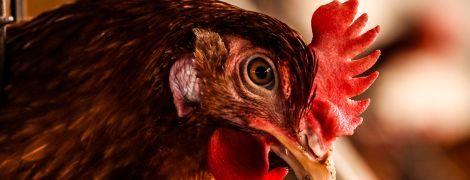 Коронавірус в Україні: у Дніпропетровській області юнак вигулював на повідці курку