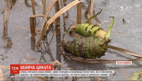 Самое ядовитое растение в Украине: как выглядит вёх и чем он опасен