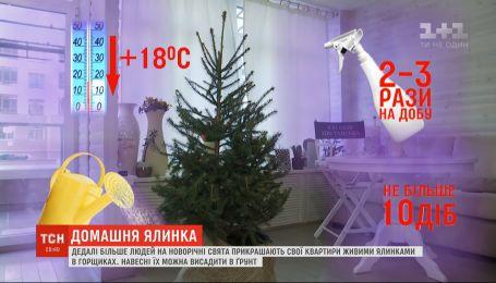 Новогодний тренд на елки в горшках: как уберечь дерево до весны