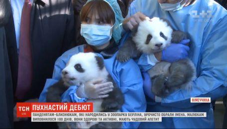 Панды-близнецы из немецкого зоопарка получили общее прозвище