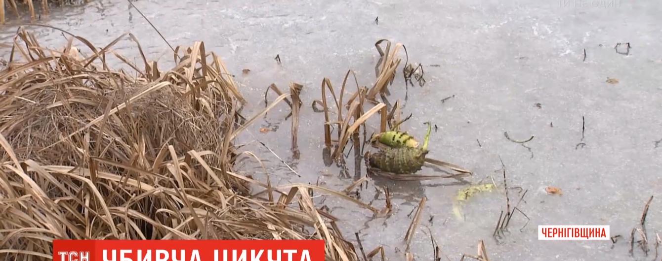 Після вживання цикути помер третьокласник із Чернігівщини. Що потрібно знати про рослину-вбивцю