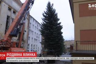 Во Львове спилили подаренную городу елку для установки на главной площади к праздникам