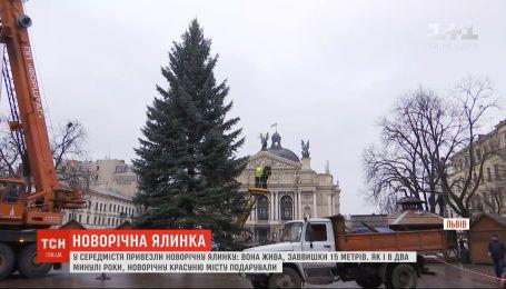 Живая и очень пышная: во Львове установили главную новогоднюю елку