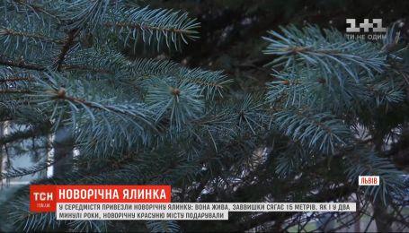 Заввишки понад 15 метрів: у Львові встановили головну новорічну ялинку