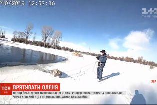 Американські поліцейські витягли оленя із замерзлого озера