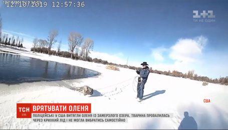 Американские полицейские вытащили оленя из замерзшего озера