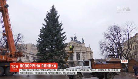 Пишну 15-метрову новорічну ялинку уже встановили у Львові