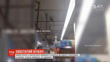 Обезьяна сбежала с контактного зоопарка и забрела в один из магазинов в Харькове
