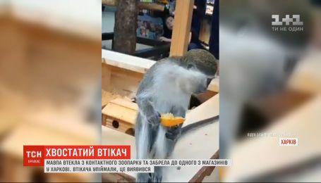 Необычный посетитель: в харьковский супермаркет забежала обезьяна