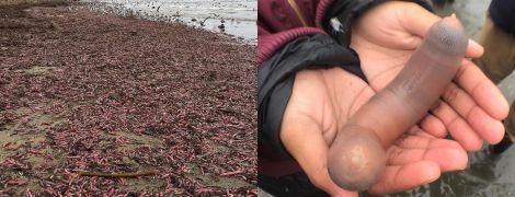 В Калифорнии на берег выбросило тысячи похожих на половой орган червей. Юзеры делятся снимками