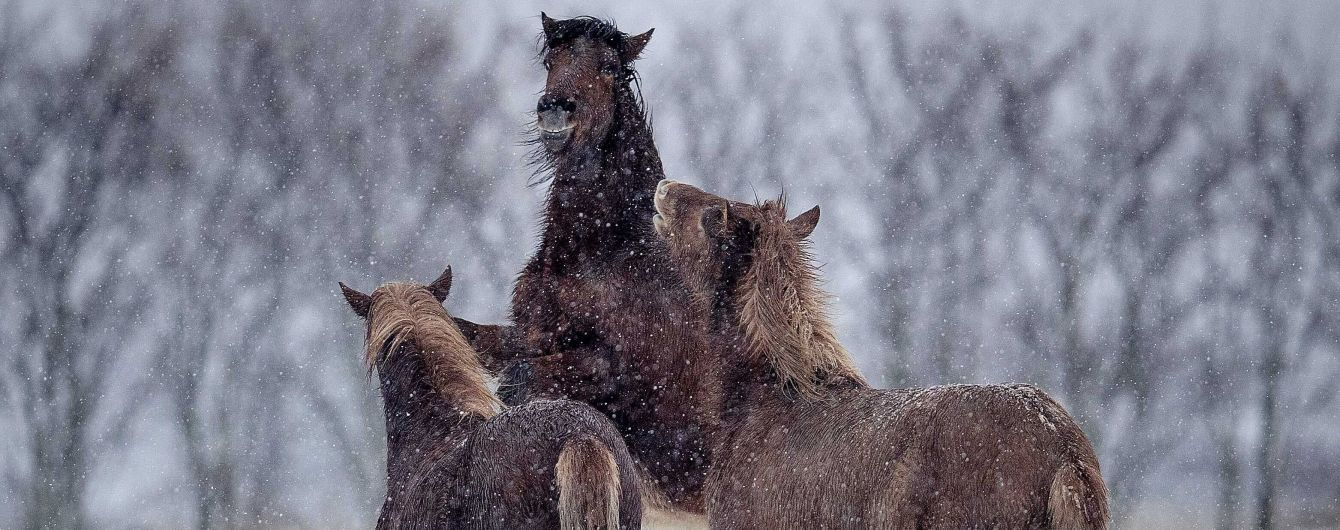 Одеські патрульні знайшли на дорозі коней, які втекли з подвір'я