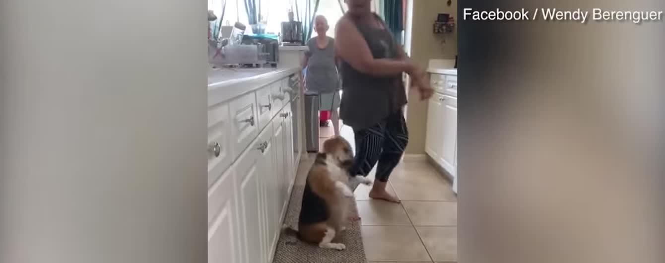 Забавная собака зажгла Сеть своим ритмичным танцем с хозяйкой