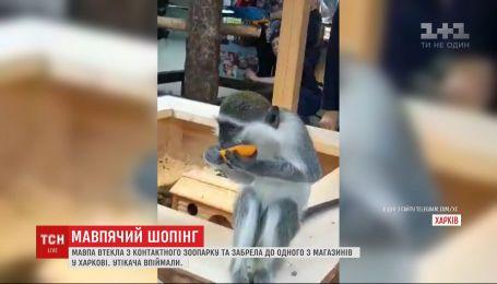 Обезьяна убежала из зоопарка и пришла в магазин спального района Харькова