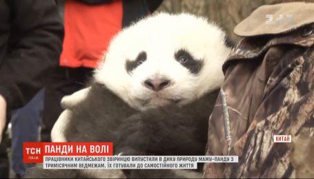 Работники китайского зверинца выпустили в дикую природу семейство панд