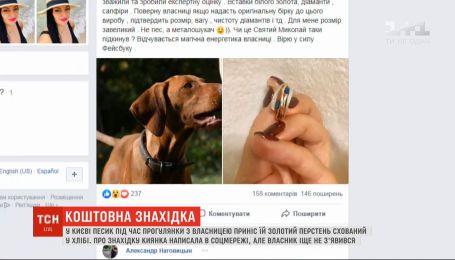 Собака во время прогулки принес хозяйке золотой перстень, спрятанный в куске хлеба