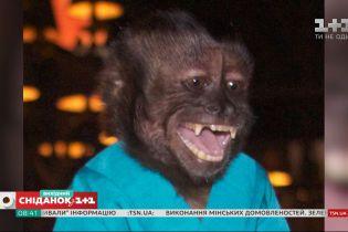 Відомі мавпи із вражаючими здібностями