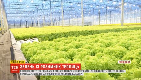 Зелень посеред зими: як комп'ютерні технології допомагають вирощувати салати