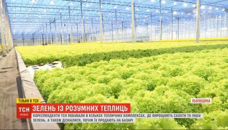 Зелень посреди зимы: как компьютерные технологии помогают выращивать салаты